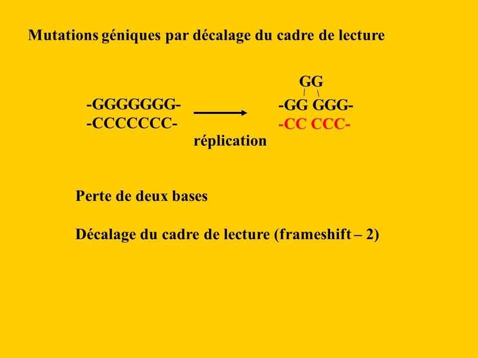Mutations géniques par décalage du cadre de lecture -GGGGGGG- -CCCCCCC- -GG GGG- -CC CCC- GG Perte de deux bases Décalage du cadre de lecture (frameshift – 2) réplication