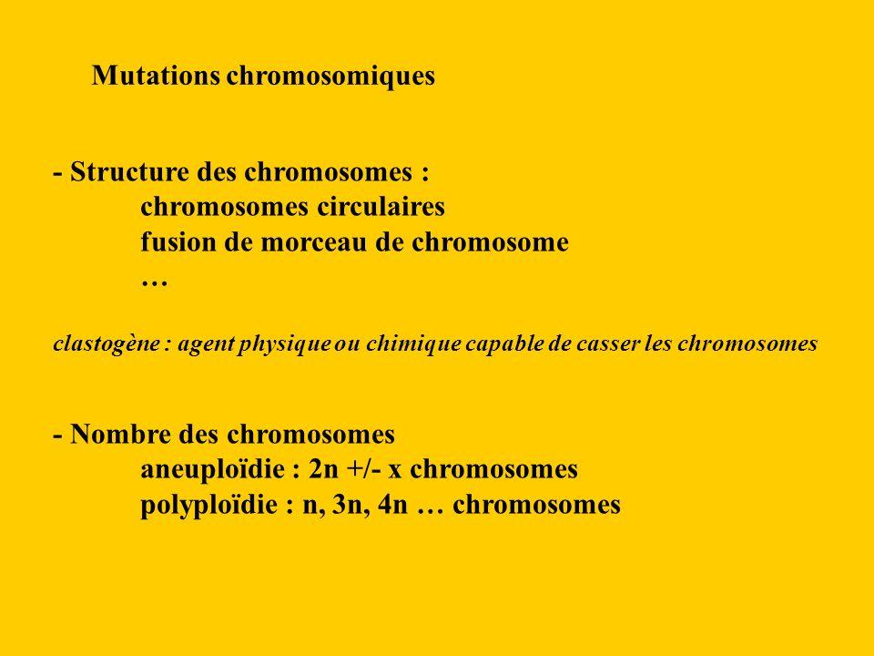 Mutations chromosomiques - Structure des chromosomes : chromosomes circulaires fusion de morceau de chromosome … clastogène : agent physique ou chimique capable de casser les chromosomes - Nombre des chromosomes aneuploïdie : 2n +/- x chromosomes polyploïdie : n, 3n, 4n … chromosomes