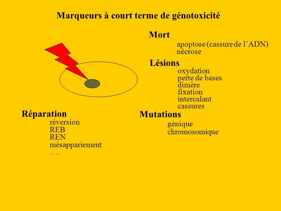 Marqueurs à court terme de génotoxicité Mort apoptose (cassure de lADN) nécrose Lésions oxydation perte de bases dimère fixation intercalant cassures Réparation réversion REB REN mésappariement ….