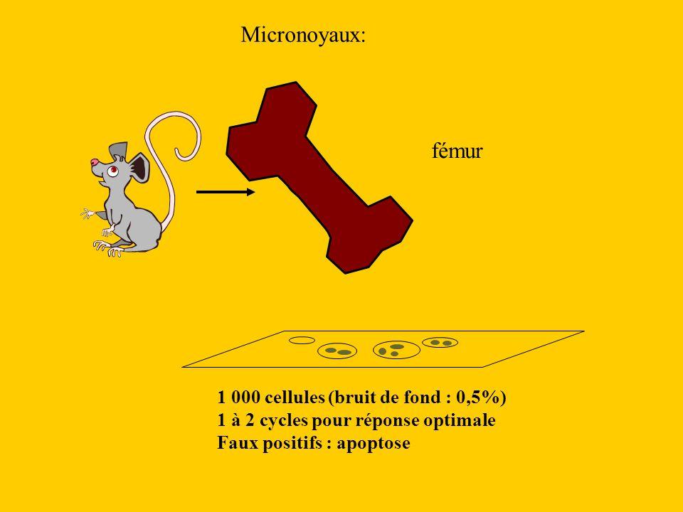 Micronoyaux: fémur 1 000 cellules (bruit de fond : 0,5%) 1 à 2 cycles pour réponse optimale Faux positifs : apoptose