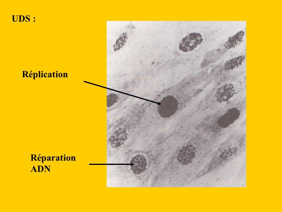 UDS : Réparation ADN Réplication