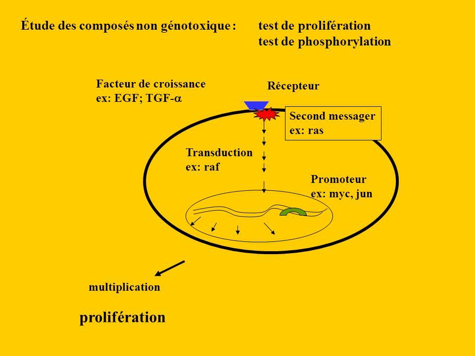 Étude des composés non génotoxique : test de prolifération test de phosphorylation Facteur de croissance ex: EGF; TGF- Récepteur multiplication Second messager ex: ras Transduction ex: raf Promoteur ex: myc, jun prolifération