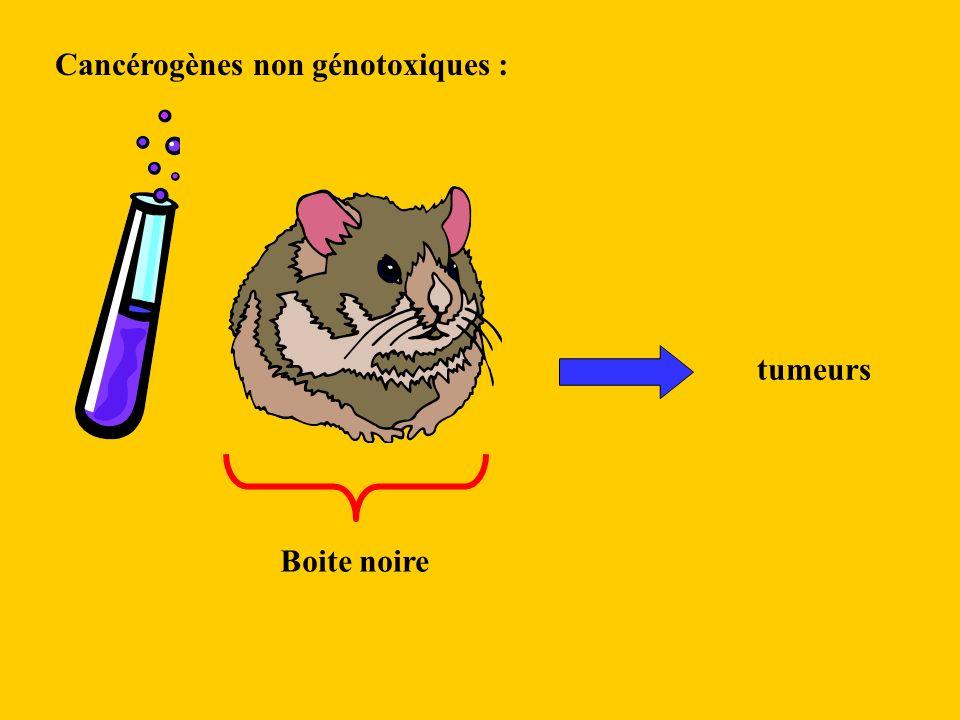 Cancérogènes non génotoxiques : tumeurs Boite noire
