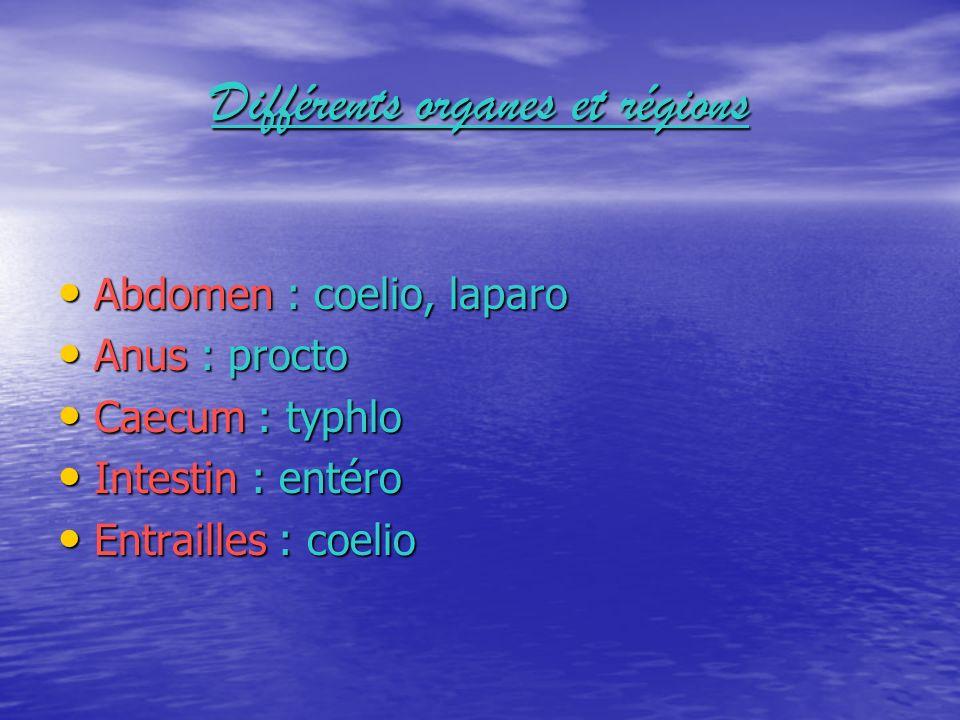 Différents organes et régions Abdomen : coelio, laparo Abdomen : coelio, laparo Anus : procto Anus : procto Caecum : typhlo Caecum : typhlo Intestin :