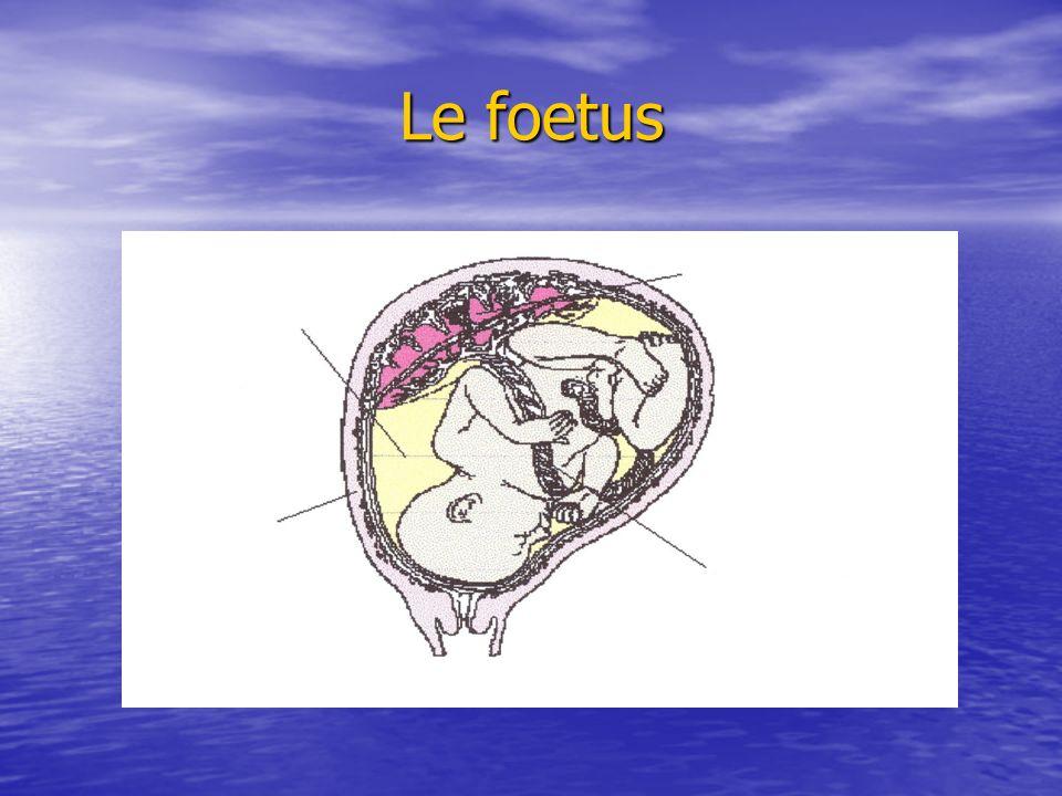 Le foetus