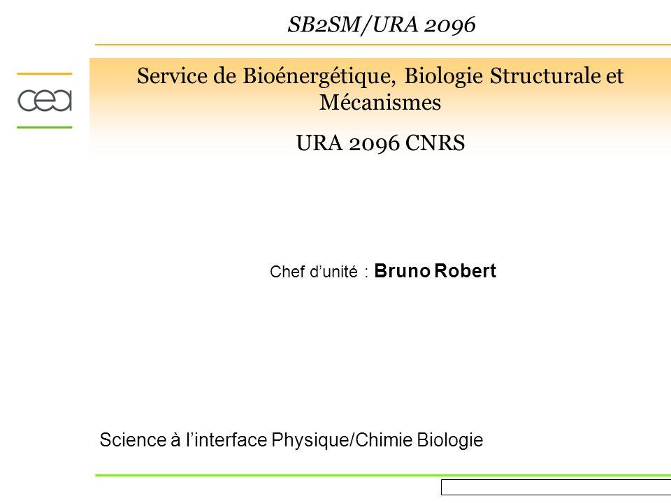 Evaluation AERES March 16 th 2010 SB2SM/URA 2096 Structure ca 150 personnes 45 chercheurs (CEA, CNRS, INSERM, Université) 50 PhD et post-docs 25 ITA