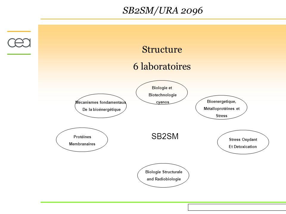 Evaluation AERES March 16 th 2010 SB2SM Research Comment les differents niveaux de structures gouvernent les fonctions biologiques.