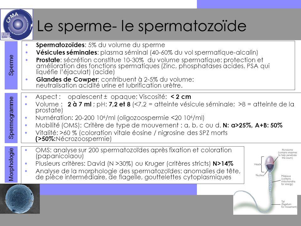 XII e JLGO 2009 Dr S. Perrier dHauterive Le sperme- le spermatozoïde Spermatozoïdes : 5% du volume du sperme Vésicules séminales : plasma séminal (40-