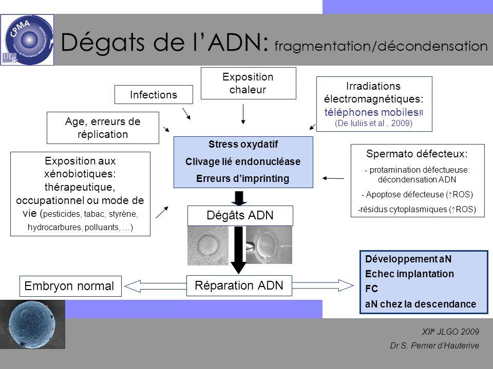 XII e JLGO 2009 Dr S. Perrier dHauterive Dégats de lADN: fragmentation/décondensation Age, erreurs de réplication Exposition aux xénobiotiques: thérap