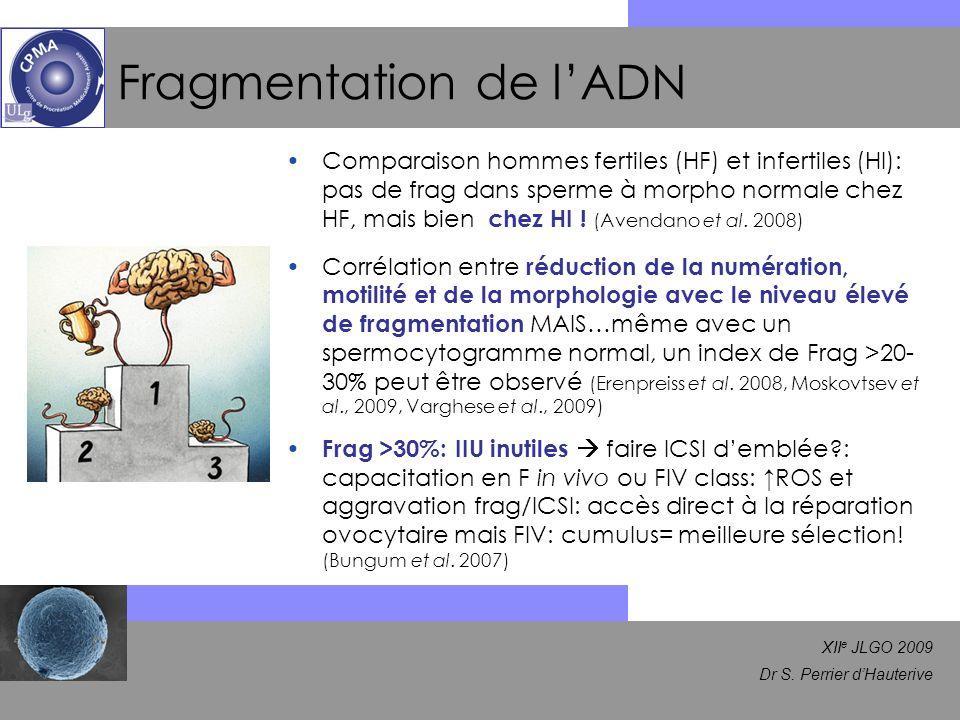 XII e JLGO 2009 Dr S. Perrier dHauterive Fragmentation de lADN Comparaison hommes fertiles (HF) et infertiles (HI): pas de frag dans sperme à morpho n