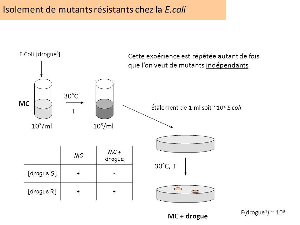 Isolement de mutants résistants chez la E.coli 30°C T 10 3 /ml10 8 /ml MC MC + drogue 30°C, T Cette expérience est répétée autant de fois que lon veut