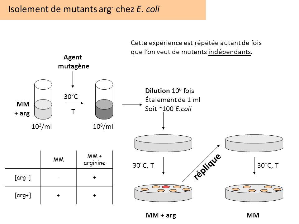 Isolement de mutants arg - chez E. coli 30°C T 10 3 /ml10 8 /ml Dilution 10 6 fois Étalement de 1 ml Soit ~100 E.coli MM + arg MM + argMM Agent mutagè