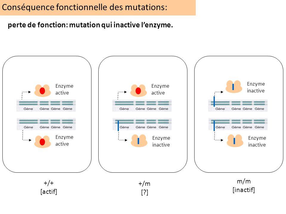 Conséquence fonctionnelle des mutations: +/+ [actif] +/m [?] m/m [inactif] Enzyme inactive Enzyme active perte de fonction: mutation qui inactive lenz