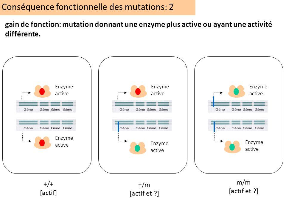 Conséquence fonctionnelle des mutations: 2 +/+ [actif] +/m [actif et ?] m/m [actif et ?] Enzyme active gain de fonction: mutation donnant une enzyme p