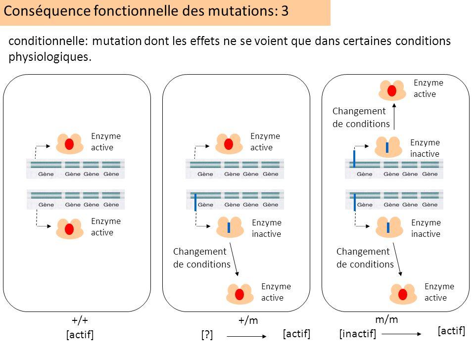 +/+ [actif] +/m [?] m/m [inactif] Enzyme inactive Enzyme active conditionnelle: mutation dont les effets ne se voient que dans certaines conditions ph