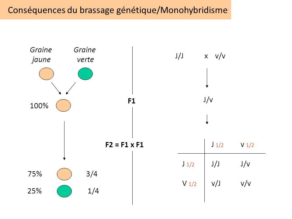 Conséquences du brassage génétique/Monohybridisme 75%3/4 25% 1/4 F1 F2 = F1 x F1 Graine verte Graine jaune 100% J/Jx v/v J/v J 1/2 v 1/2 J 1/2 J/JJ/v