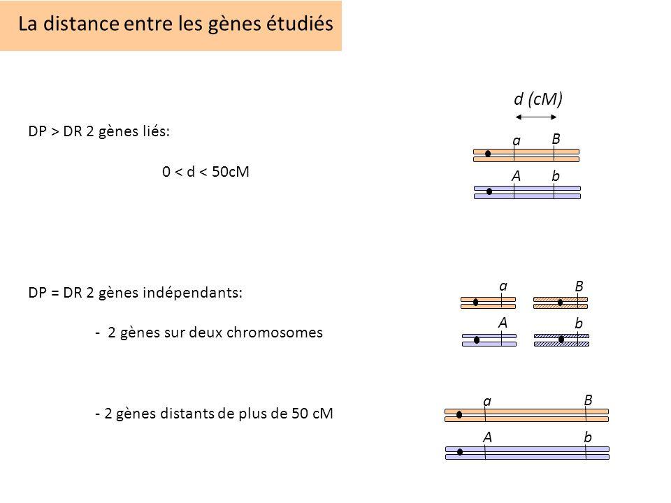 La distance entre les gènes étudiés DP > DR 2 gènes liés: 0 < d < 50cM DP = DR 2 gènes indépendants: - 2 gènes sur deux chromosomes - 2 gènes distants