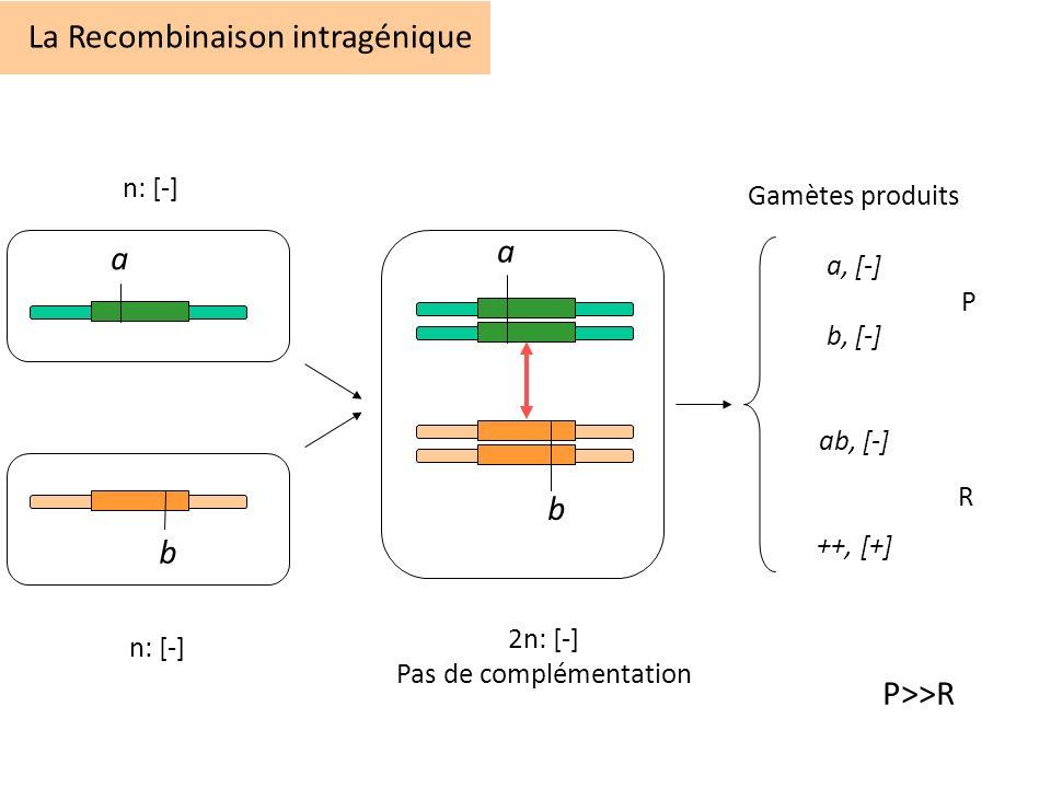 La Recombinaison intragénique a b Gamètes produits a, [-] b, [-] ab, [-] ++, [+] a b n: [-] 2n: [-] Pas de complémentation P R P>>R