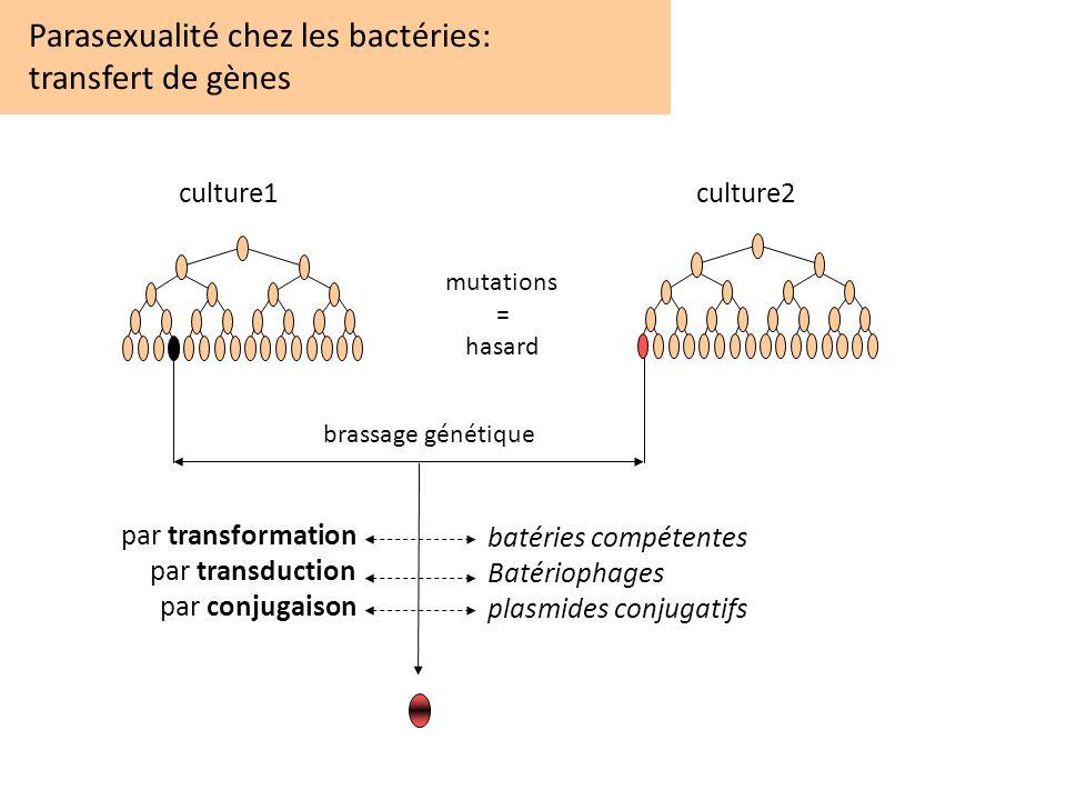 Parasexualité chez les bactéries: transfert de gènes culture1culture2 mutations = hasard brassage génétique par transformation par transduction par co