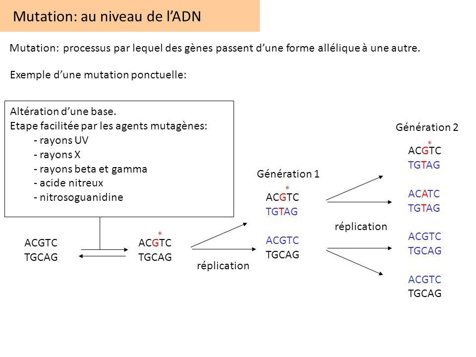 Altération dune base Mutation: au niveau de lADN Mutation: processus par lequel des gènes passent dune forme allélique à une autre. ACGTC TGCAG ACGTC