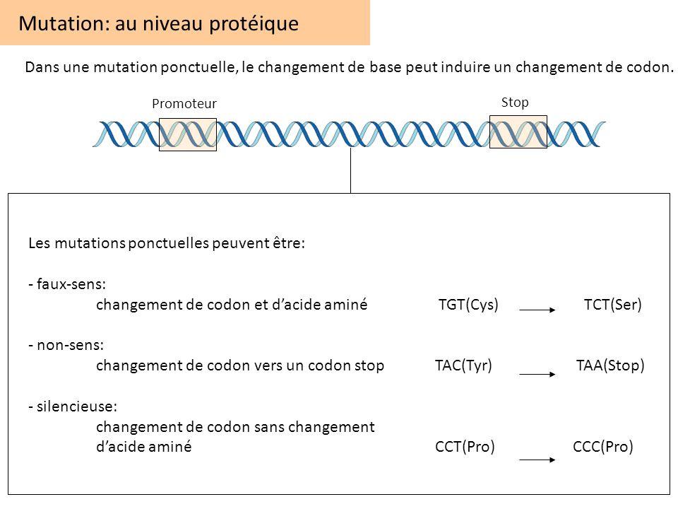 Les mutations ponctuelles peuvent être: - faux-sens: changement de codon et dacide aminé TGT(Cys) TCT(Ser) - non-sens: changement de codon vers un cod