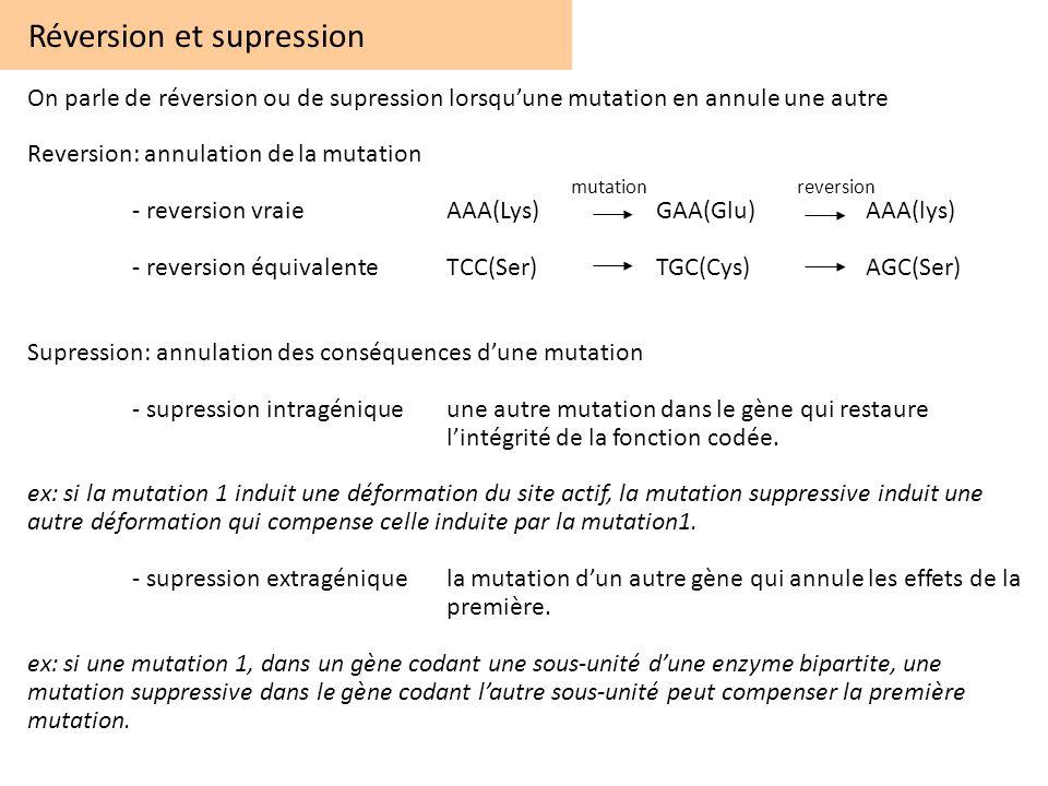 Réversion et supression On parle de réversion ou de supression lorsquune mutation en annule une autre Reversion: annulation de la mutation - reversion