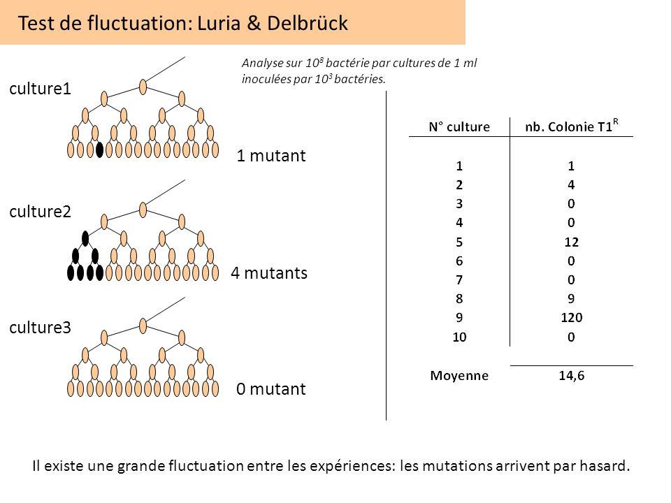 Test de fluctuation: Luria & Delbrück culture1 culture2 culture3 1 mutant 4 mutants 0 mutant Analyse sur 10 8 bactérie par cultures de 1 ml inoculées