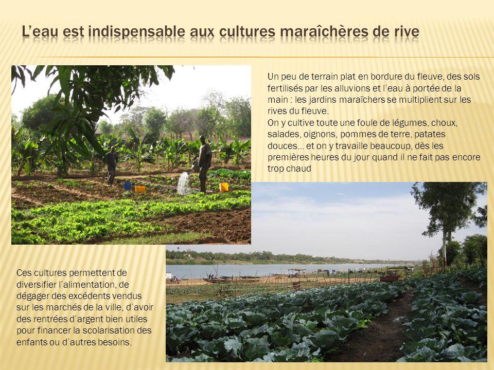 Un peu de terrain plat en bordure du fleuve, des sols fertilisés par les alluvions et leau à portée de la main : les jardins maraîchers se multiplient
