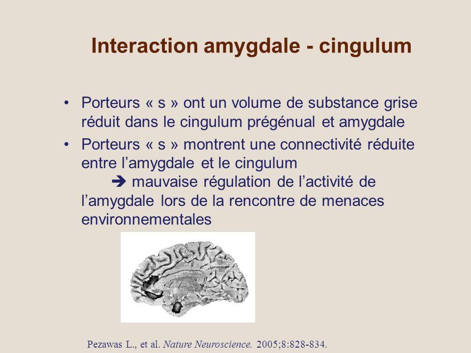 Interaction amygdale - cingulum Porteurs « s » ont un volume de substance grise réduit dans le cingulum prégénual et amygdale Porteurs « s » montrent une connectivité réduite entre lamygdale et le cingulum mauvaise régulation de lactivité de lamygdale lors de la rencontre de menaces environnementales Pezawas L., et al.