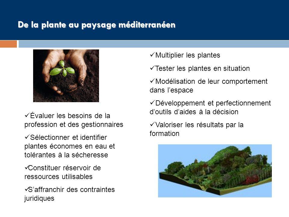 De la plante au paysage méditerranéen Évaluer les besoins de la profession et des gestionnaires Sélectionner et identifier plantes économes en eau et