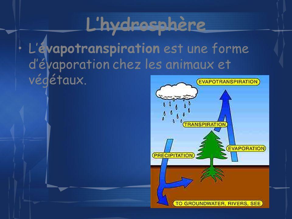 Lhydrosphère L évapotranspiration est une forme dévaporation chez les animaux et végétaux.