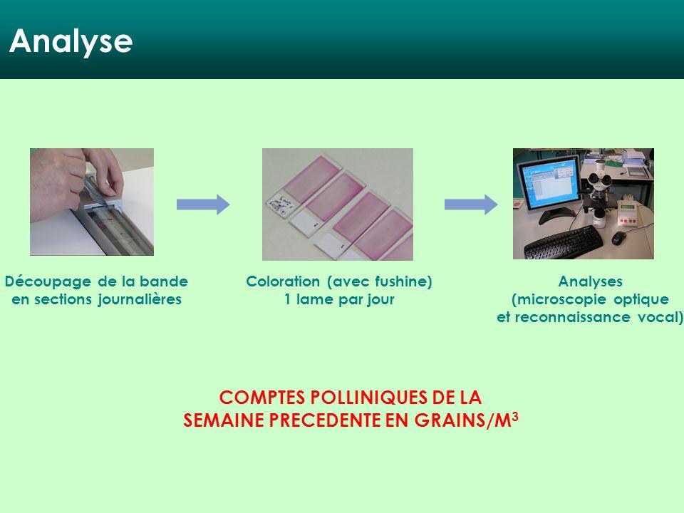 Analyse Découpage de la bande en sections journalières Coloration (avec fushine) 1 lame par jour Analyses (microscopie optique et reconnaissance vocal