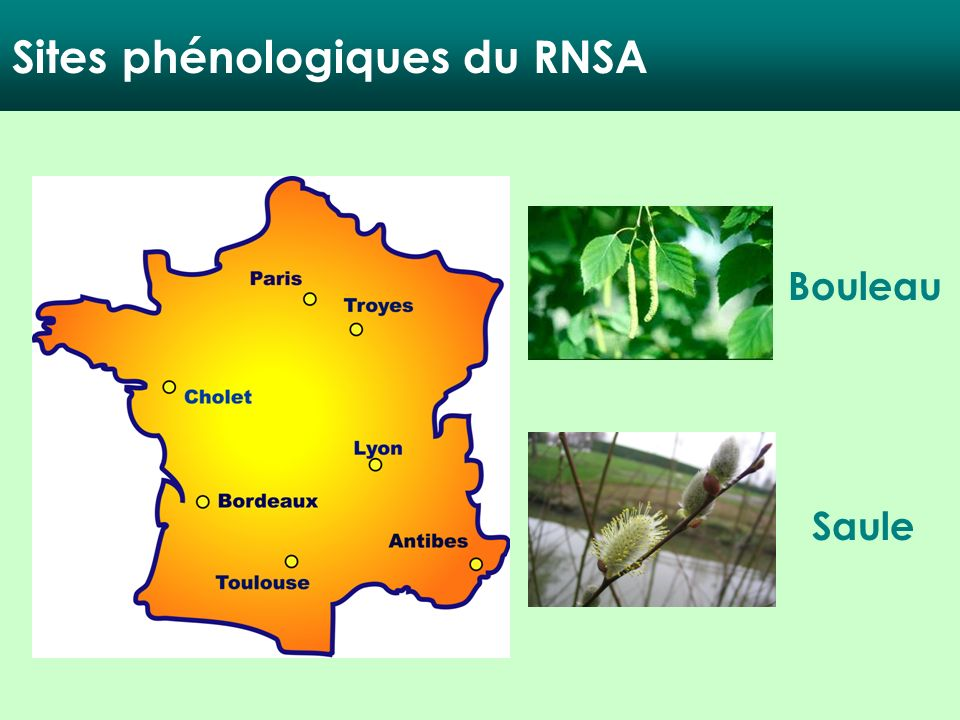 Bouleau Saule Sites phénologiques du RNSA