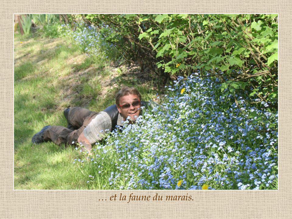 … et la faune du marais.