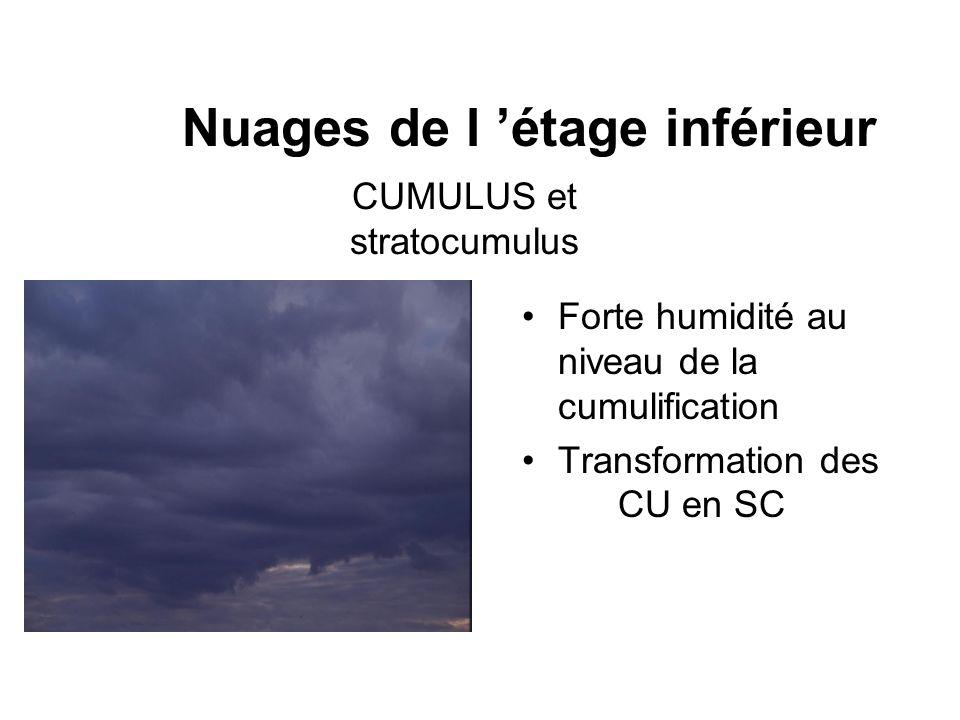 Nuages de l étage inférieur Forte humidité au niveau de la cumulification Transformation des CU en SC CUMULUS et stratocumulus
