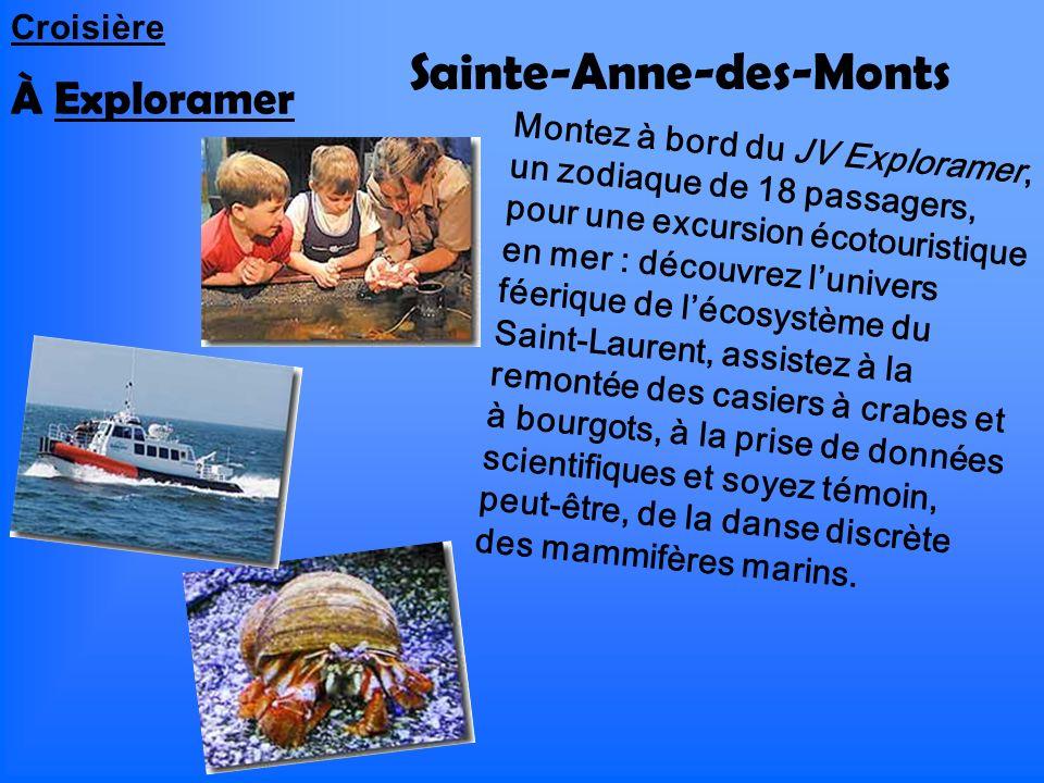 Sainte-Anne-des-Monts À Exploramer Montez à bord du JV Exploramer, un zodiaque de 18 passagers, pour une excursion écotouristique en mer : découvrez l