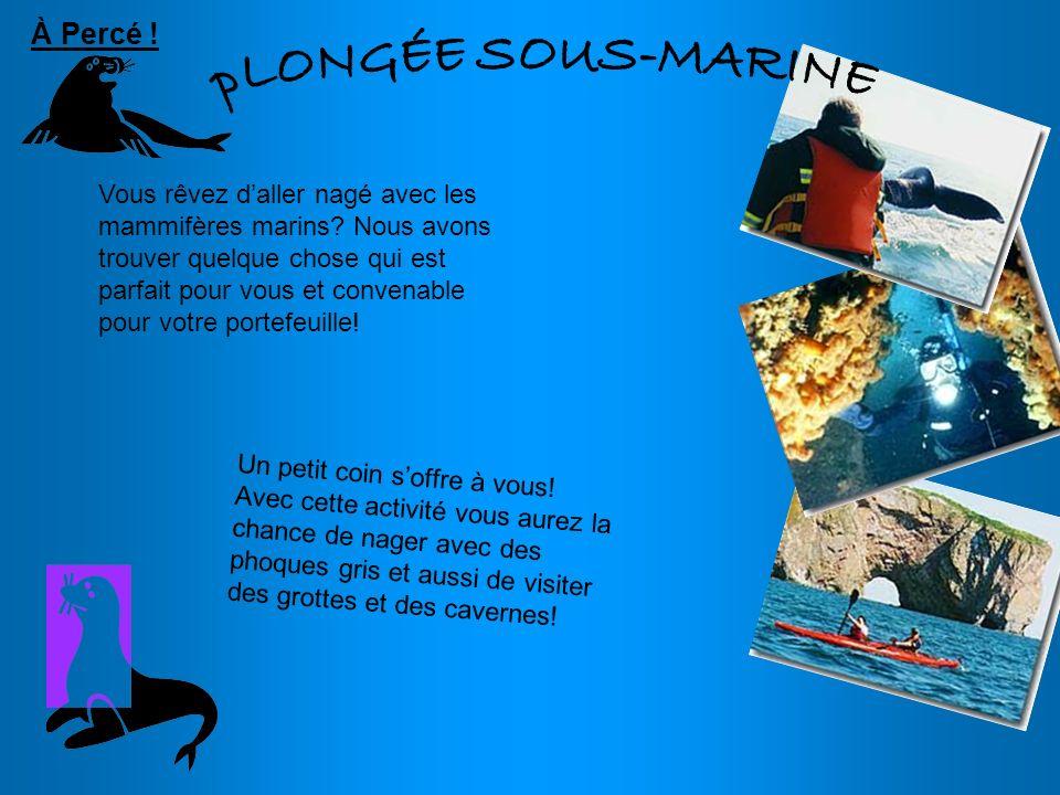 Vous rêvez daller nagé avec les mammifères marins? Nous avons trouver quelque chose qui est parfait pour vous et convenable pour votre portefeuille! U