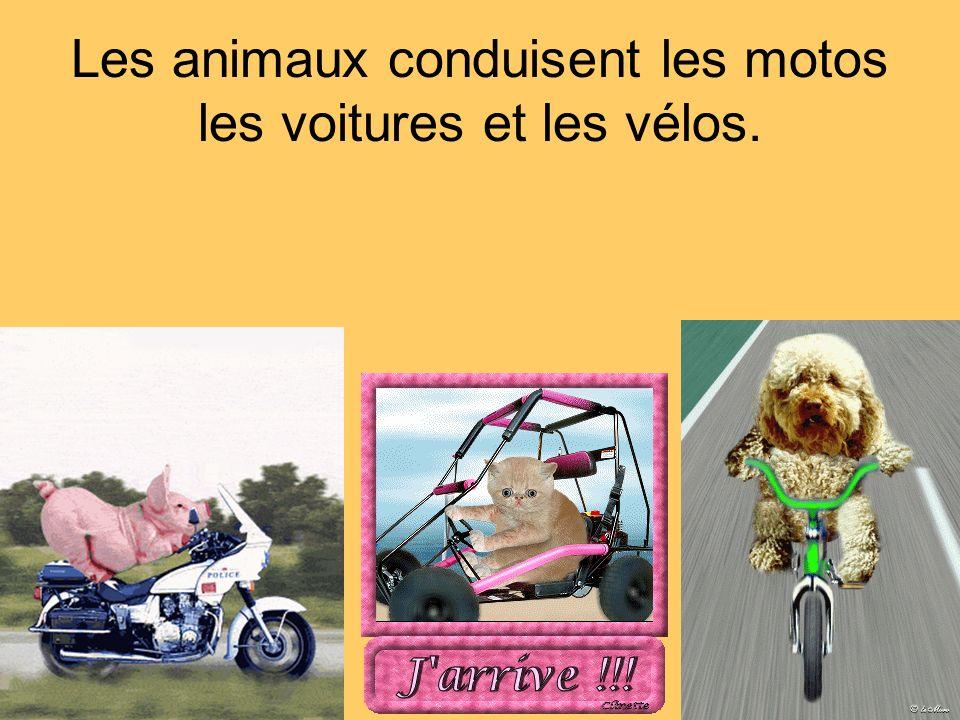 Les animaux conduisent les motos les voitures et les vélos.