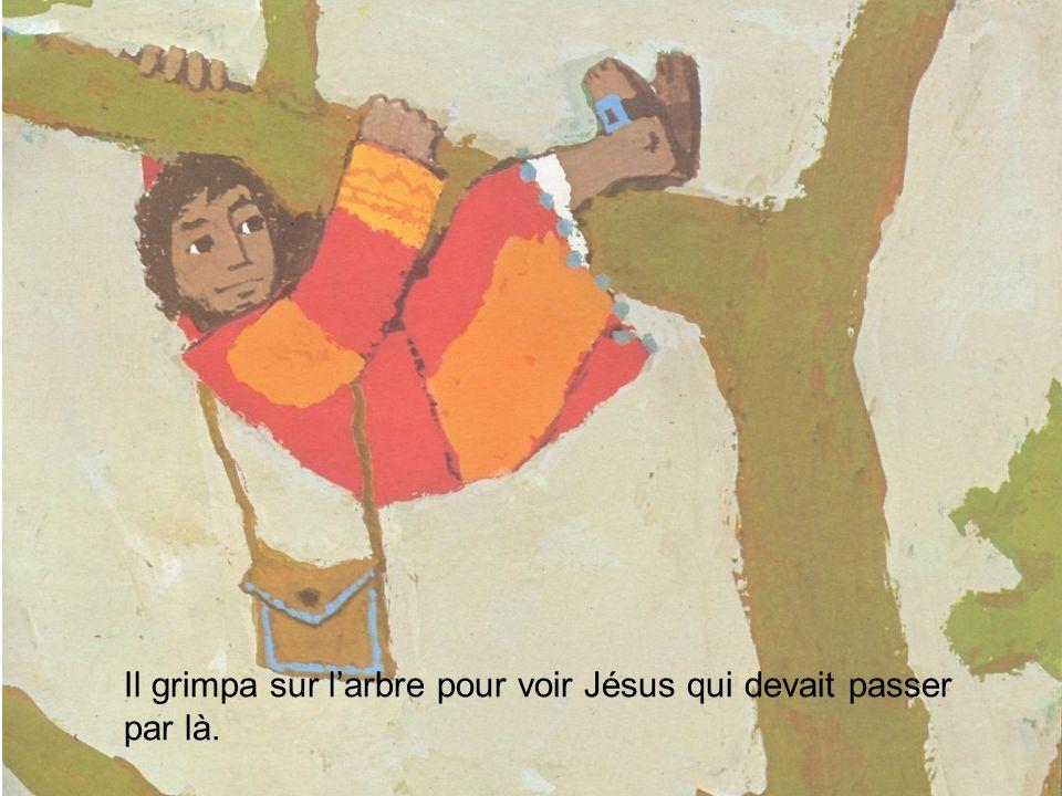 Il grimpa sur larbre pour voir Jésus qui devait passer par là.