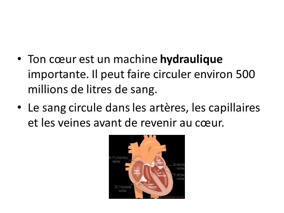 Ton cœur est un machine hydraulique importante. Il peut faire circuler environ 500 millions de litres de sang. Le sang circule dans les artères, les c