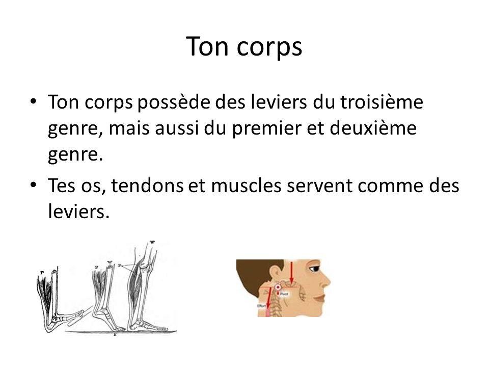 Ton corps Ton corps possède des leviers du troisième genre, mais aussi du premier et deuxième genre. Tes os, tendons et muscles servent comme des levi