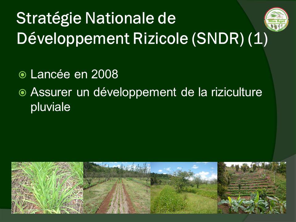 Stratégie Nationale de Développement Rizicole (SNDR) (1) Lancée en 2008 Assurer un développement de la riziculture pluviale