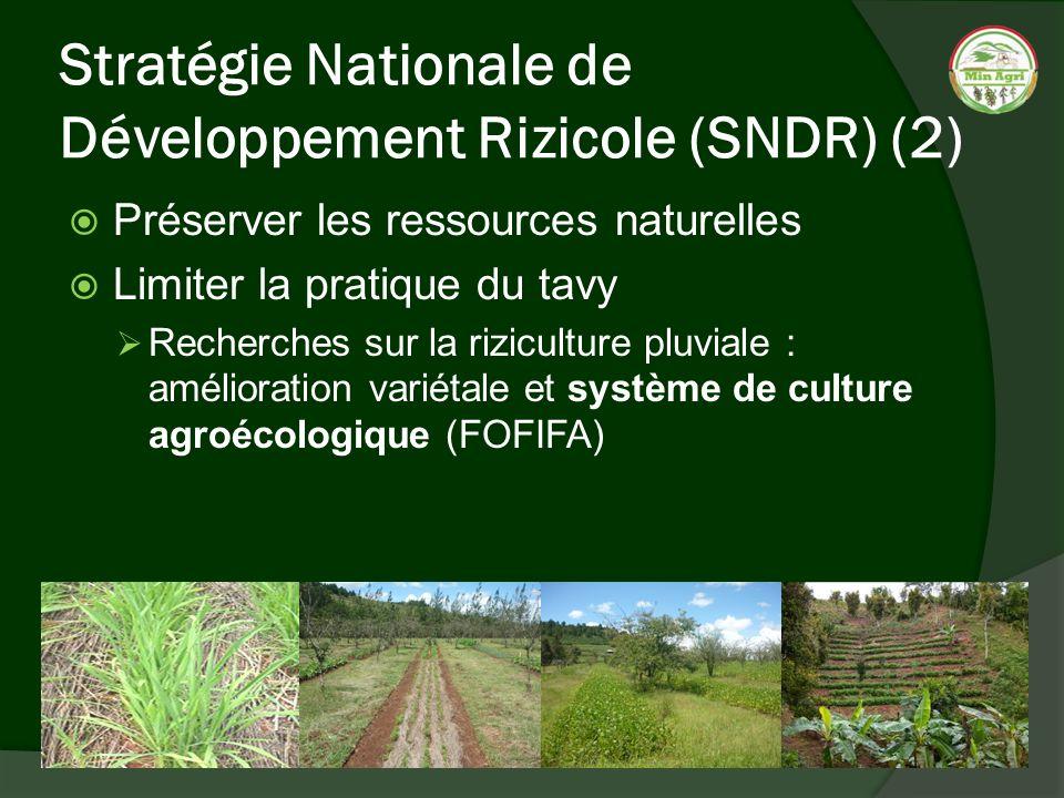 Stratégie Nationale de Développement Rizicole (SNDR) (2) Préserver les ressources naturelles Limiter la pratique du tavy Recherches sur la riziculture