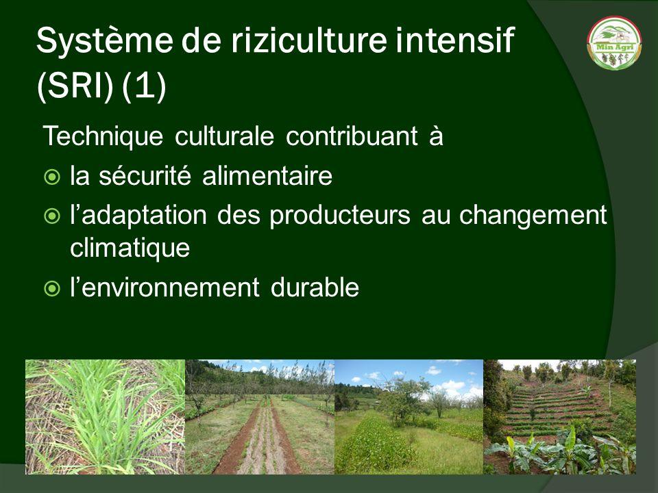 Système de riziculture intensif (SRI) (1) Technique culturale contribuant à la sécurité alimentaire ladaptation des producteurs au changement climatiq