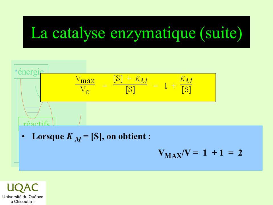 réactifs produits énergie temps La catalyse enzymatique (suite) Lorsque K M = [S], on obtient : V MAX /V = 1 + 1 = 2