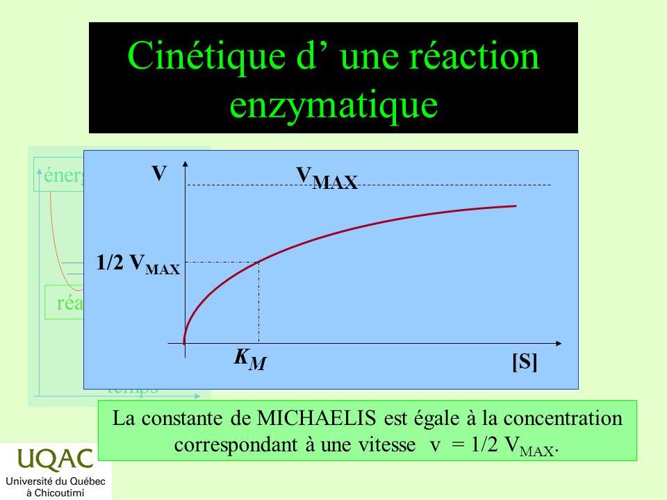 réactifs produits énergie temps Cinétique d une réaction enzymatique [S] V V MAX La constante de MICHAELIS est égale à la concentration correspondant