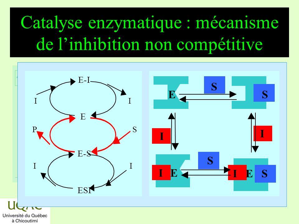 réactifs produits énergie temps Catalyse enzymatique : mécanisme de linhibition non compétitive E-I E E-S ESI I P S I E I IE I S E I E S S S