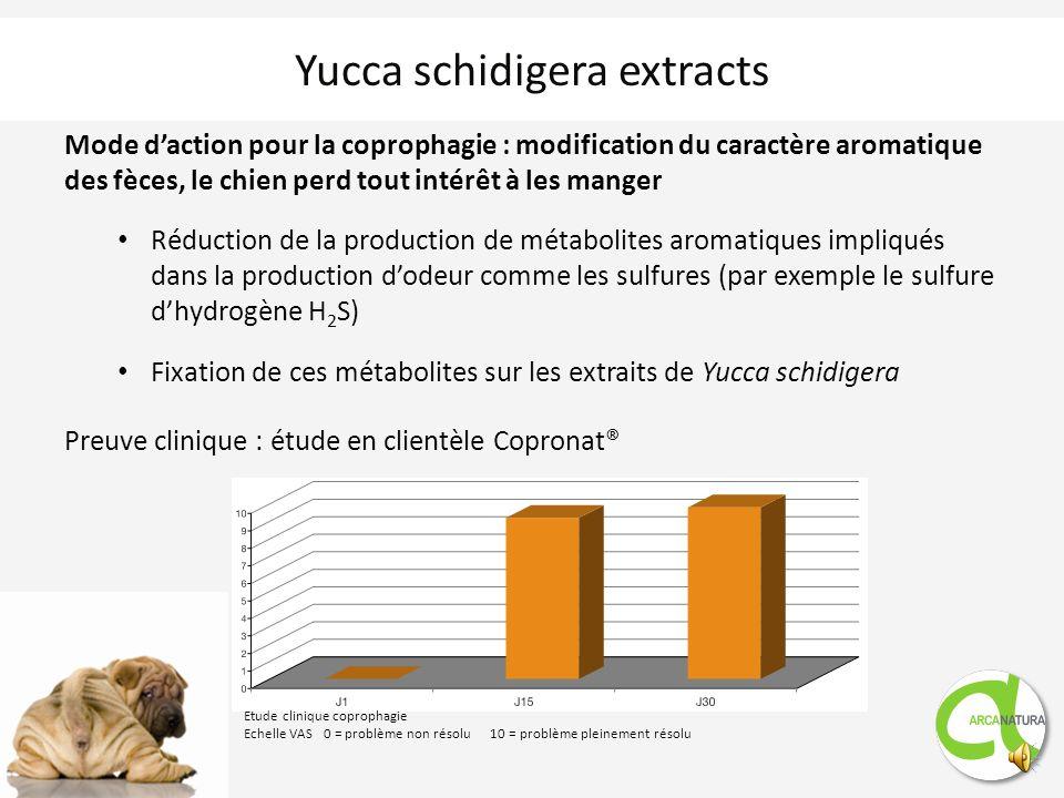 Mode daction pour la coprophagie : modification du caractère aromatique des fèces, le chien perd tout intérêt à les manger Réduction de la production de métabolites aromatiques impliqués dans la production dodeur comme les sulfures (par exemple le sulfure dhydrogène H 2 S) Fixation de ces métabolites sur les extraits de Yucca schidigera Preuve clinique : étude en clientèle Copronat® Yucca schidigera extracts Etude clinique coprophagie Echelle VAS 0 = problème non résolu 10 = problème pleinement résolu