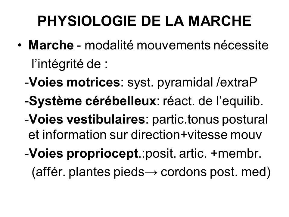 PHYSIOLOGIE DE LA MARCHE Marche - modalité mouvements nécessite lintégrité de : -Voies motrices: syst. pyramidal /extraP -Système cérébelleux: réact.