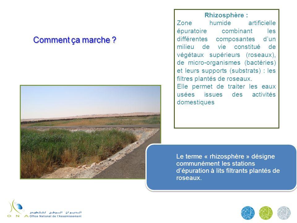 Comment ça marche ? Rhizosphère : Zone humide artificielle épuratoire combinant les différentes composantes dun milieu de vie constitué de végétaux su